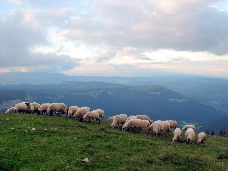 zdravstveni-turizam-pale-romanija-jahorina-vazdusna-banja (3)